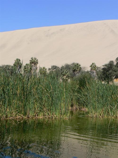 Fotos del Oasis de Huacachina - Perú. Foto por martin_javier