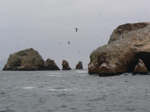 Fotos de Islas Ballestas - Perú. Foto por martin_javier