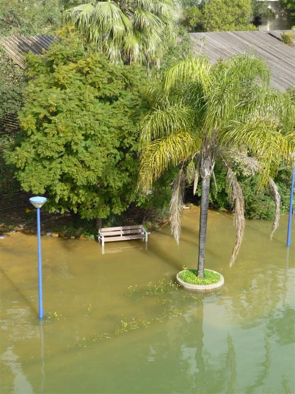 Fotos de la inundaci n del jard n americano en el for Jardin americano sevilla
