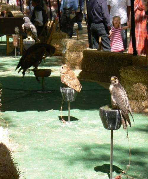 Fotos de ave de presa o rapaz. foto por martin_javier