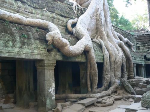 Fotos del Templo Ta Prohm en Angkor - Camboya. Foto por martin_javier