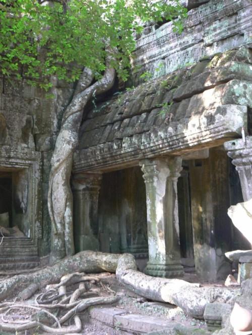 Foto del Templo Ta Prohm de Angkor - Camboya. Foto por martin_javier