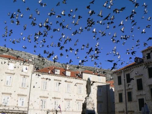 Fotos de la Plaza Gundulic de Dubrovnik - Croacia. Foto por martin_javier