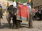 12_02_03_elefantes-amber_foto_martin_javier (2)