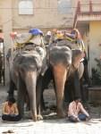 12_02_03_elefantes-amber_foto_martin_javier (4)
