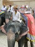12_02_03_elefantes-amber_foto_martin_javier (6)
