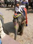 12_02_03_elefantes-amber_foto_martin_javier (8)