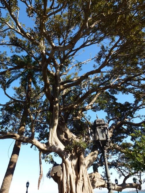Foto árboles y farola en Alameda Apodaca en Cádiz - España. Foto por martin_javier
