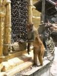 12_03_19_monos-Swayambhunath_foto_martin_javier (1)