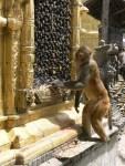 12_03_19_monos-Swayambhunath_foto_martin_javier (2)